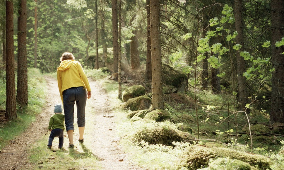 BABYBJÖRN Magazine – A walk in the forest is a great outdoor activity with kids.